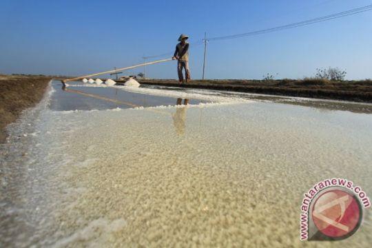 Petani garam masih nikmati harga garam tinggi
