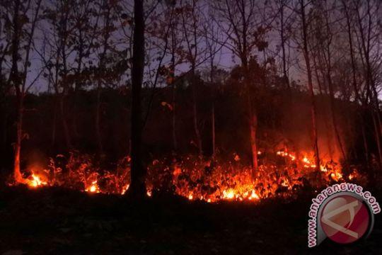 12 hektare hutan di kawasan Gunung Rinjani tebakar