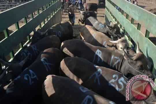 Dinas KPKP DKI Jakarta jamin hewan kurban sehat