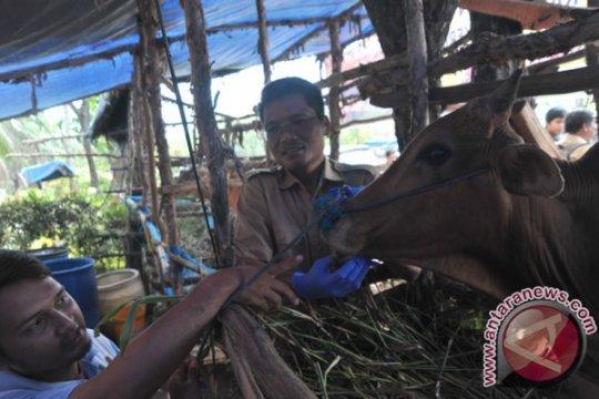 Dinas Pertanian Palembang tertibkan praktik dokter hewan tak berizin