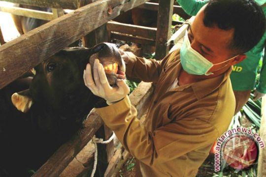 """Kotabaru waspadai hewan kurban terjangkit penyakit """"zoonosis"""""""