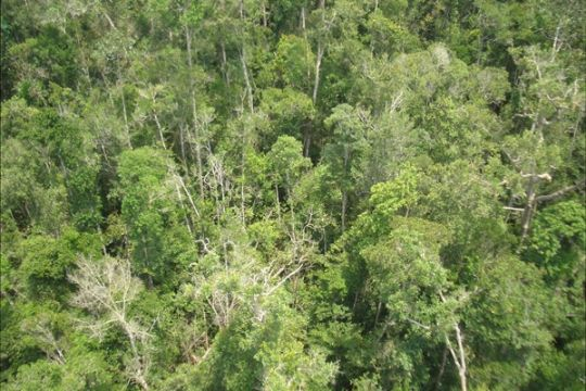 Tim ekspedisi petakan jalur jelajah di jantung hutan Borneo
