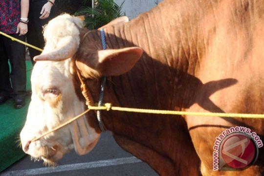 Gubernur Sulbar pantau sapi bantuan Presiden Jokowi