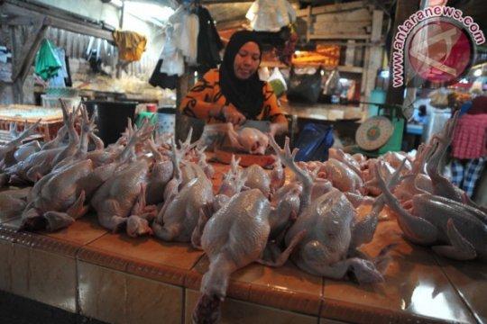 Harga ayam potong di Palembang melambung