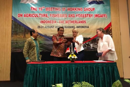 Belanda tertarik pengembangan bawang merah Indonesia