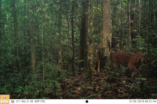 BBKSDA Riau datangkan pawang harimau asal Aceh