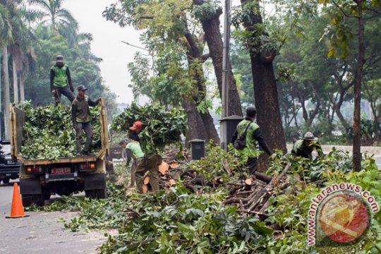 Jaktim intensifkan pemangkasan pohon antisipasi musim hujan