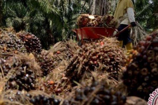 Peneliti LIPI manfaatkan limbah sawit jadi bio-oil dan bioplastik