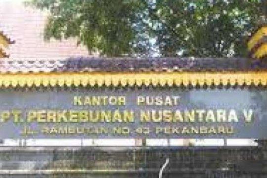 Relawan apresiasi Jokowi kembalikan 2.800 hektare PTPN V ke masyarakat