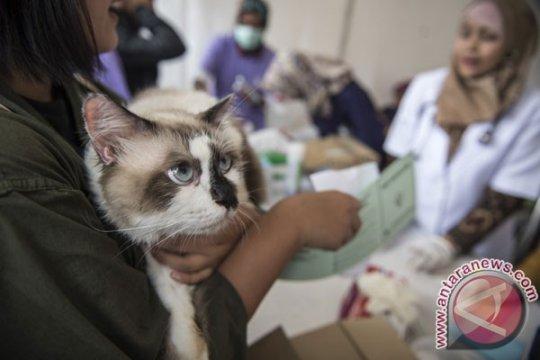 Vaksinasi mampu tekan kasus rabies di Kabupaten Sigi-Sulteng