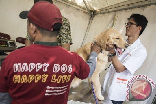 Terkena liur anjing rabies di daerah tubuh yang terbuka juga bisa tertular