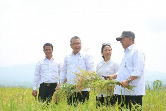 Tiga menteri panen padi di Ciamis