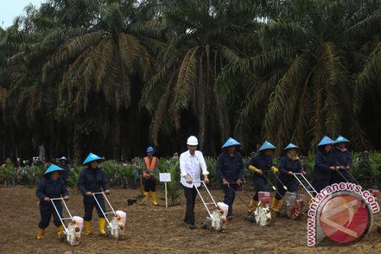 Riau jadi lokasi pertama Program Peremajaan Sawit 2018