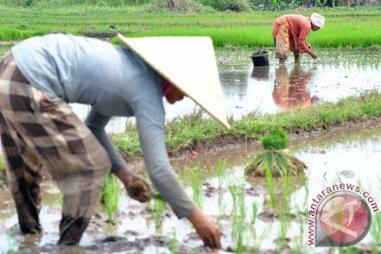 Puluhan hektare lahan di Bengkulu batal dicetak jadi sawah