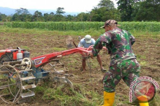Biaya produksi tinggi, petani Wondama berhenti tanam padi