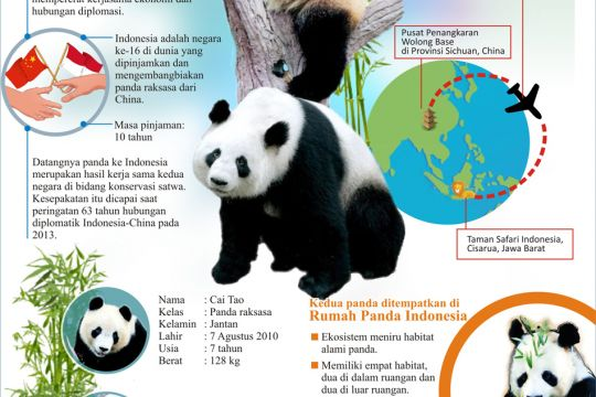 Diplomasi Panda dari Negeri Tirai Bambu