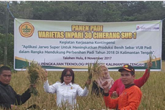Teknologi Jarwo Super terbukti tingkatkan produksi benih sebar padi