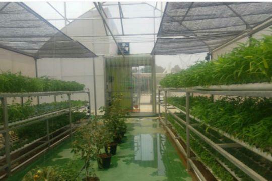 Mekanisasi pertanian modern untuk hortikultura