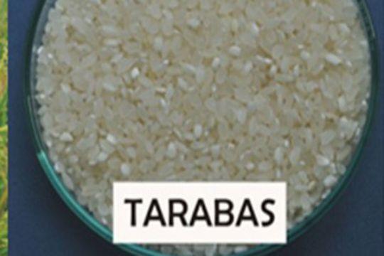 Tarabas, beras japonica pertama dari Indonesia