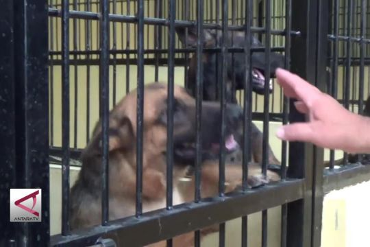 Anjing Polisi Berperan Amankan Tahun Baru
