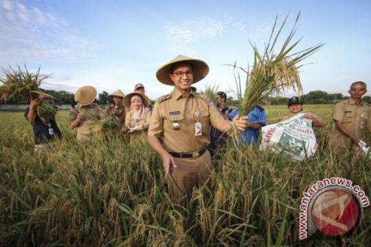 Potensi produksi beras di DKI pada Januari-April capai 423,88 ton