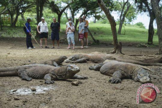 Kunjungan wisatawan ke Taman Nasional Komodo turun akibat cuaca