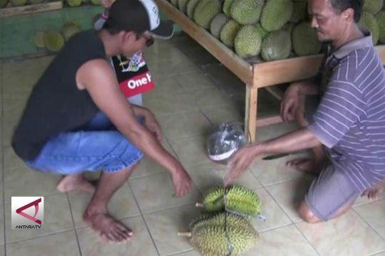 Bisa Makan Durian Kapan Saja di Rumah Durian