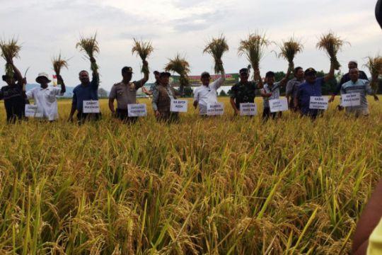 Bupati Aceh Besar panen padi di Pulo Aceh