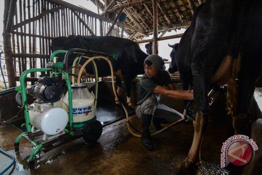 Kementan tetap fokus berdayakan peternak sapi perah