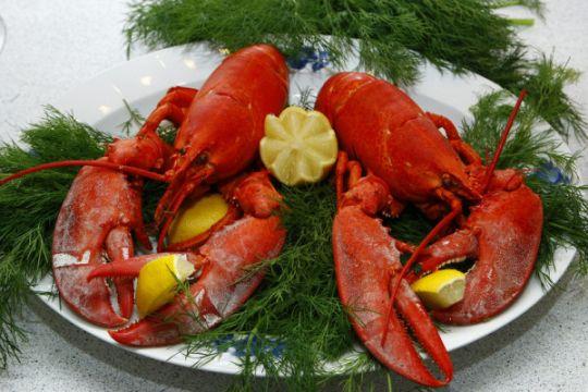 Pemerintah Swiss keluarkan aturan memasak lobster