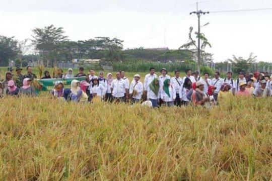 Peneliti sebut padi hibrida tingkatkan produktivitas beras