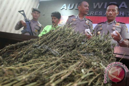 Polres Cianjur amankan ratusan kilogram ganja siap edar