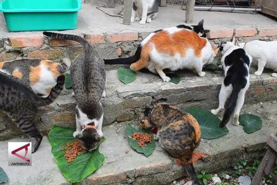 Menengok surga kucing liar di Pekanbaru