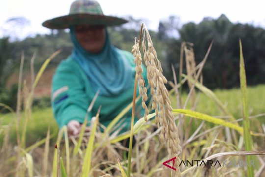 Sambut Hari Pangan Sedunia, Kalbar kampanye peduli pangan via lomba