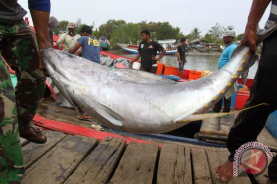 SKIPM : Ekspor tuna Gorontalo capai 11,9 ton