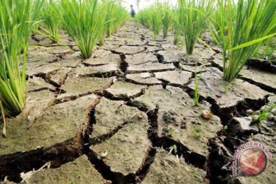 Empat kabupaten di NTT kekeringan ekstrem