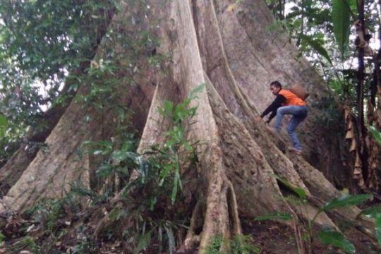 Yuk, lestarikan pohon langka Indonesia