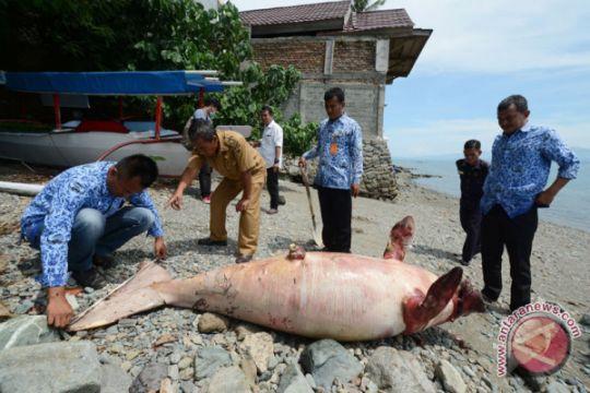 Ikan Dugong mati terdampar