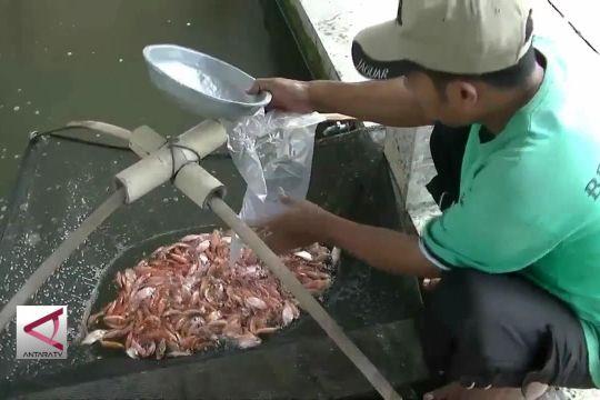 Cuaca pengaruhi produksi benih ikan di Temanggung