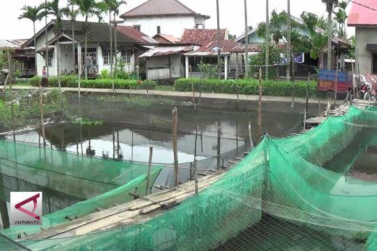 Kawasan kumuh di Palembang yang kini menjadi sentra ikan hias