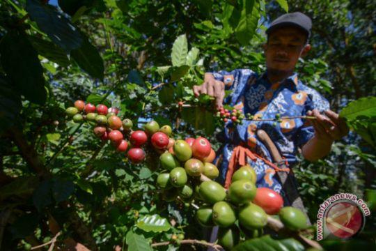 Petani Garut sepakati ekspor kopi lima tahun ke Taiwan