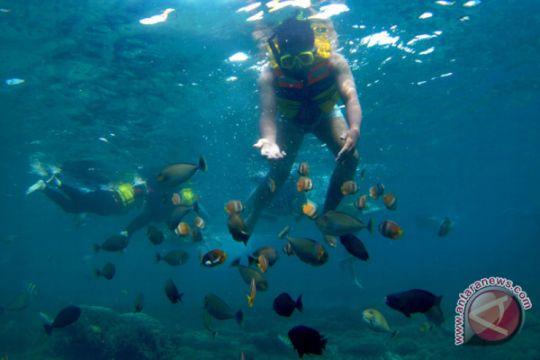 Wisata bawah laut Lombok