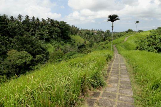 Menikmati olahraga dan alam di Bukit Campuhan, Ubud