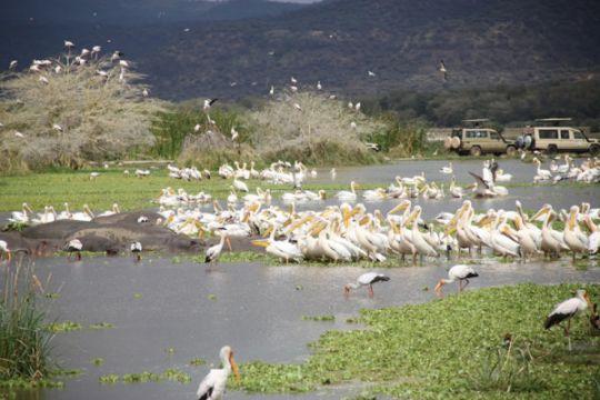 Habitat flamingo dan kuda nil Tanzania terancam