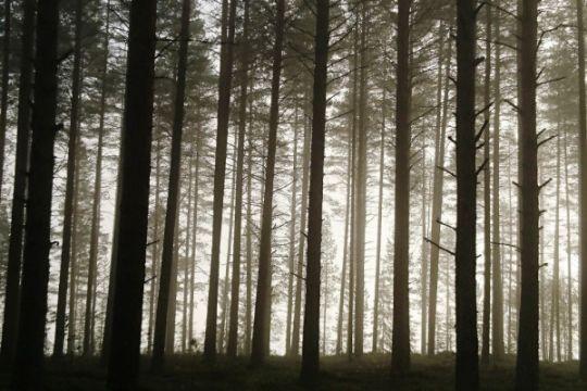 Ribuan sukarelawan reboisasi hutan tertua Portugal