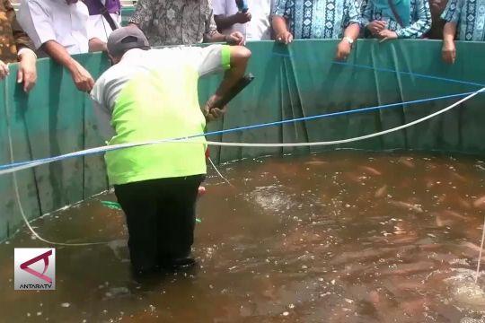 Membudidayakan ikan nila melalui bioflok di Sukabumi