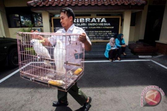 Yogyakarta jadi tempat transit perdagangan satwa dilindungi