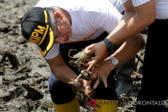 Japesda laporkan dugaan pengrusakan mangrove