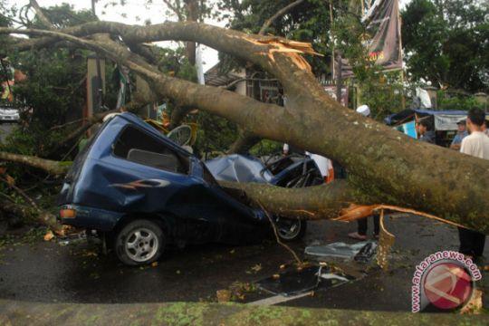 12 mobil rusak ditimpa beringin tumbang