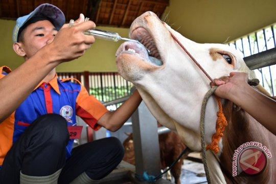 Bupati Malang paham kapan sapi birahi